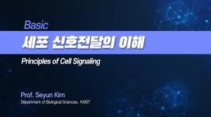 세포 신호전달의 이해